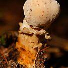 alien fungi by Manon Boily