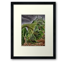 Laurie's Sunflower Framed Print