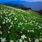 Washington Mountains by Inge Johnsson