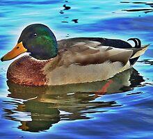 Male Mallard Duck by youmeus