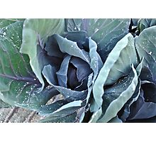 Cabbage Photographic Print