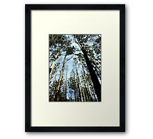 Tall Timbers Framed Print