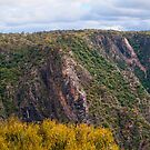 Wollomombi Gorge by Chris  Randall