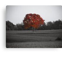 Its a Red Red World Canvas Print