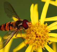 Insect Feeding by Epicurian