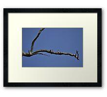 Beautiful Blue Framed Print