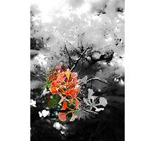 adding color Photographic Print