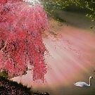 Kitsune sleeps beneath the Sakura as Shiratori guardians keep watch. by Megan Noble