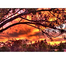 sunset through the trees #2 Photographic Print