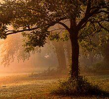 Tree In Mist by Carolyn  Fletcher
