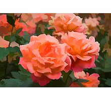 Happy, Fragrant Roses - Impressions of June Photographic Print