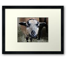 Curious Young Generation Framed Print