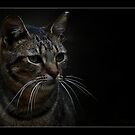The Cat by RAY AGIUS