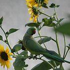 Parrots stealing Sunflowers by Julian Lowry