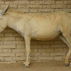 Camouflaged Donkey by Julian Lowry