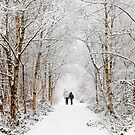 The Snowy Path by Robin Whalley