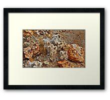 Native Cactus Palomino Valley Framed Print