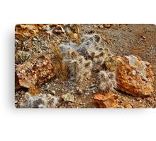 Native Cactus Palomino Valley Canvas Print