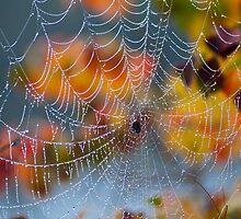 Autumn Web by Jonicool