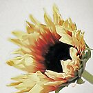 *Sunflower* by DeeZ (D L Honeycutt)