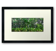 Maritime Forest Panorama Framed Print