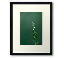 Day 169 - 26th December 2011 Framed Print