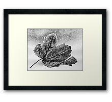 Decaying Leaf Framed Print
