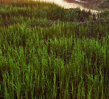 Summer Morning in the Marsh by jimcrotty