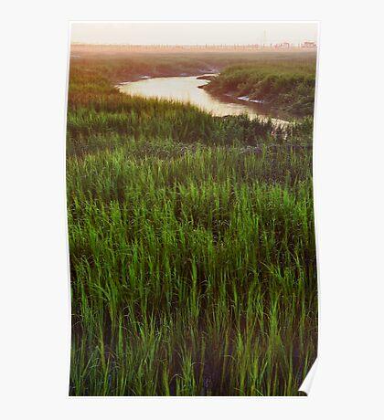 Summer Morning in the Marsh Poster