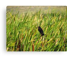 My Little Black Bird Canvas Print