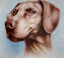 MAISIE The Hungarian Viszler. Acrylic and Pencil Crayon. 2011 by Louise Elisabeth Hunt