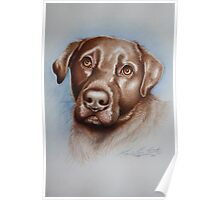 BRUD The Chocolate Labrador. Acrylic paint and Pencil Crayon 2011 Poster