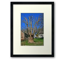 The Martyr's Tree Framed Print