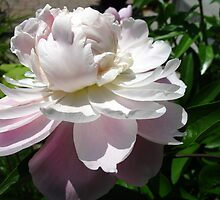 Peony shades and grades by MarianBendeth