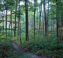 Veteran's Woods, Barrie Ont by Jeanette Muhr