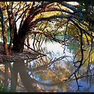 Under The River Gums!  by Anna Ryan