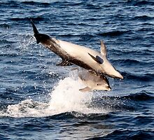 Dolphins by Darren Bale