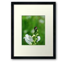 Twice-Stabbed Stink Bug Framed Print