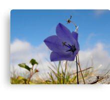 Wildflowers. The Burren County Clare Ireland Canvas Print