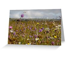Summer in the Burren Greeting Card