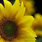 ~ sunny face ~ by Maria  Moro