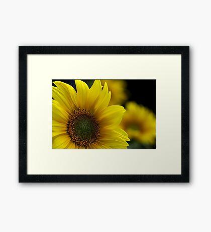 ~ sunny face ~ Framed Print