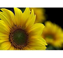 ~ sunny face ~ Photographic Print
