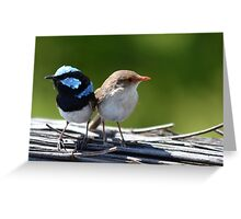 ♥Fairy-Wrens♥ Greeting Card
