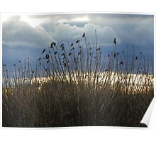 Clouds and Dry Grass Poster
