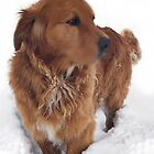 ☜ ☝ ☞ ☟ I LOVE THE SNOW COME ON OVER ☜ ☝ ☞ ☟  by ✿✿ Bonita ✿✿ ђєℓℓσ