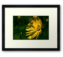 Yellow Flower (Halifax Gardens) Framed Print