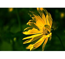 Yellow Flower (Halifax Gardens) Photographic Print