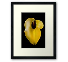 Yellow Flower (Mendel) Framed Print