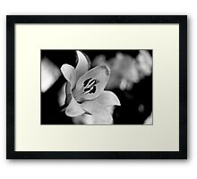 BW Lily II (Mendel) Framed Print